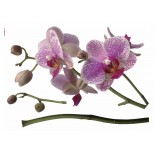 Stickere decorative KOMAR cod-17702 Orchidee 100x70cm